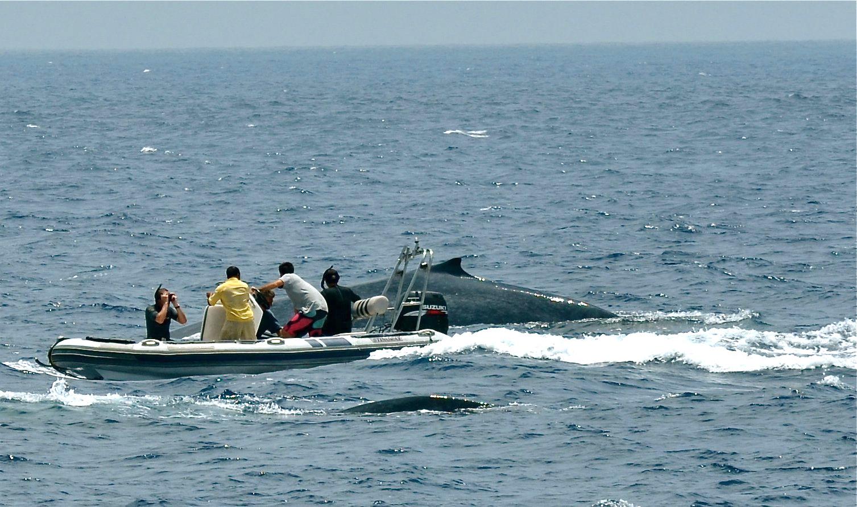 Sri Lanka Blue Whale_web
