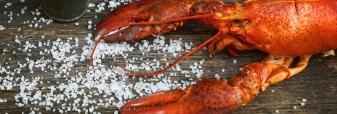 Lobster & Foie Gras Special