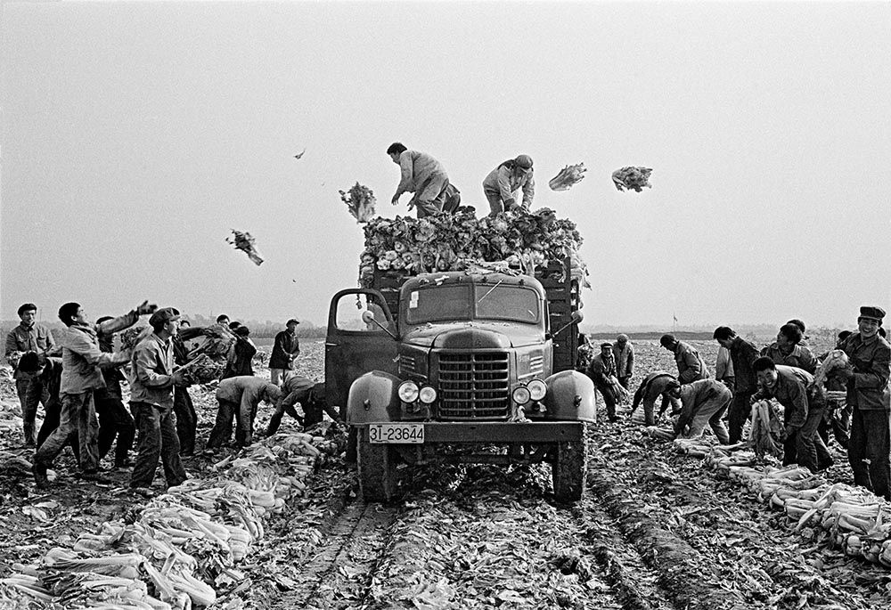 Peasants at Evergreen Commune outside of Beijing toss cabbages – the only vegetable available in winter – onto a slow-moving truck in 1980. Photo: Liu Heung Shing